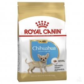 Chihuahua 30 Junior (Чихуахуа 30 Юниор)