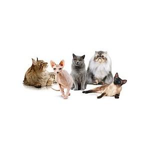 Купить сухой корм Royal Canin (Роял Канин) для кошек разных пород в зоомагазине Zoolife.by