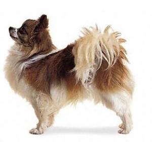 Купить сухой корм Royal Canin (Роял Канин) для собак мелких пород в зоомагазине Zoolife.by