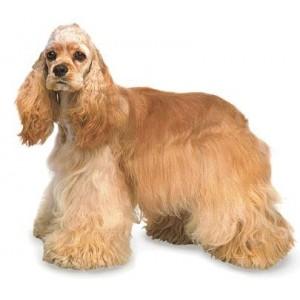 Купить Сухой корм Royl Canin (Роял Канин) для взрослых собак средних пород в зоомагазине Zoolife.by