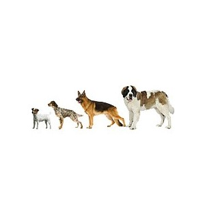 Купить сухой корм Royal Canin (Роял Канин) для собак разных пород