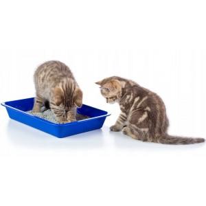 Купить наполнитель для кошек   Наполнитель для туалета кошки   Зоомагазин   Зоотовары