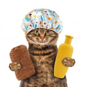 Шампуни для кошек