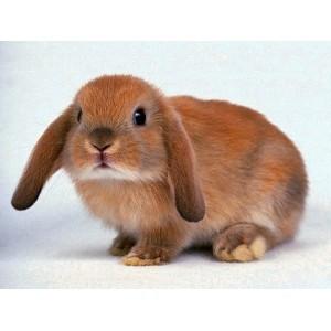 Клетки для кроликов   Купить клетку   Зоомагазин