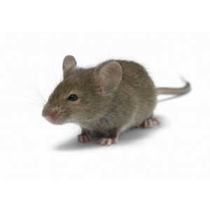 Клетки для мышей | Купить клетку | Зоомагазин
