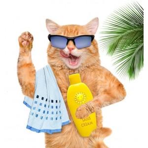 Купить средства гигиены для кошек