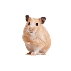 Купить товары для грызунов | Купить клетки для грызунов | Зоотовары | Корм для грызунов | Клетки для хомяков