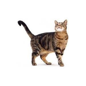 Купить товары для кошек   Купить товары для котят  Зоотовары   Корм для кошек