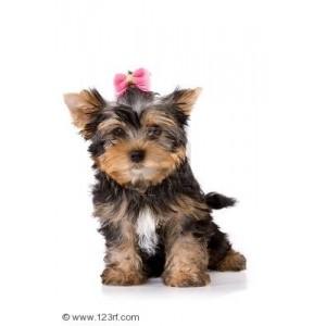Купить сухой корм Royal Canin (Роял Канин) для щенков мелких пород в зоомагазине Zoolife.by