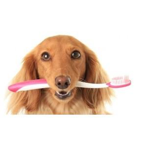 Средства Canina по уходу за зубами