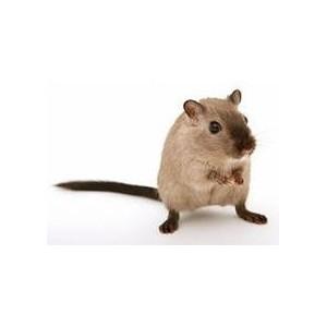 Корм для мышей и песчанок