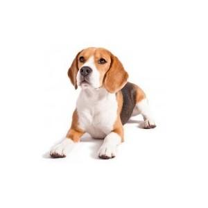 Купить товары для собак и щенков. Зоотовары для собак. Сухой корм для собак. Конссервы для собак. Аксессуары для собак. Игрушки