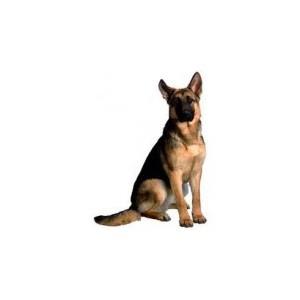 Сухой корм Optima Nova для взрослых собак