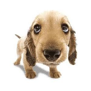 Купить пелёнки для собак | Приучить собаку ходить  в туалет