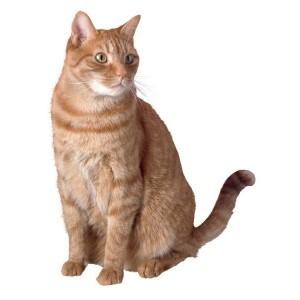 Сухие корма для пожилых кошек