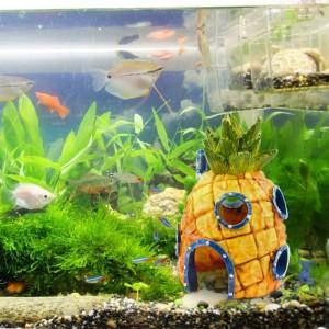 Аксессуары для аквариумов