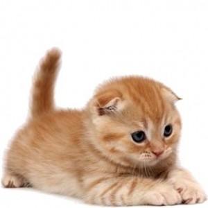 Консервы и пресервы Hill's для котят