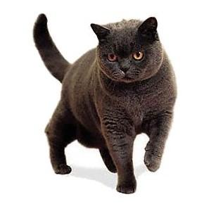 Консервы и пресервы для взрослых кошек