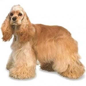 Сухой корма Hill's для собак средних пород