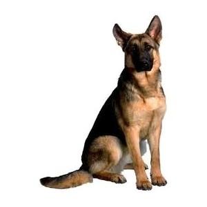 Сухие корма Hill's для собак крупных пород
